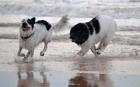 Cuáles son los perros a los que más les gusta el agua
