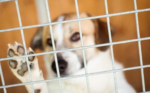Motivos para adoptar a un perro