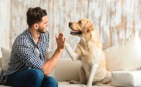 Ventajas de entrenar al perro