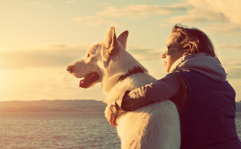 Motivos por los que viajar con tu perro en vacaciones