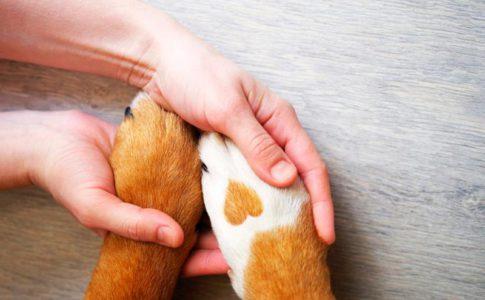 Pasos para cortarle las uñas al perro