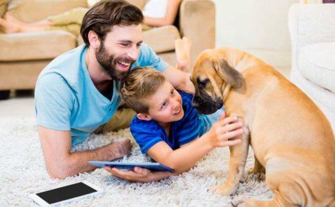 Post operatorio del perro tras ser castrado