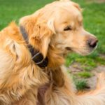 Cómo evitar que tu cachorro se rasque