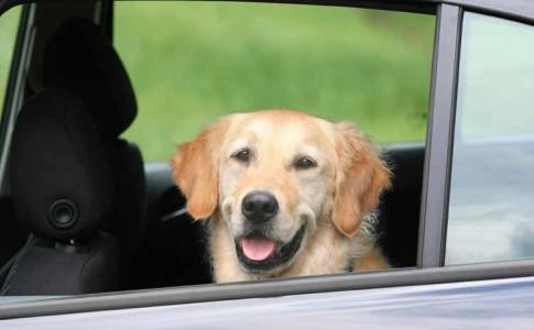 Recomendaciones para el transporte de mascotas