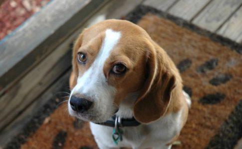 Condiciones que debes cumplir para adoptar un perro