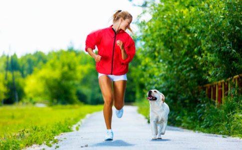 Cómo salir a pasear con tu perro sin estrés