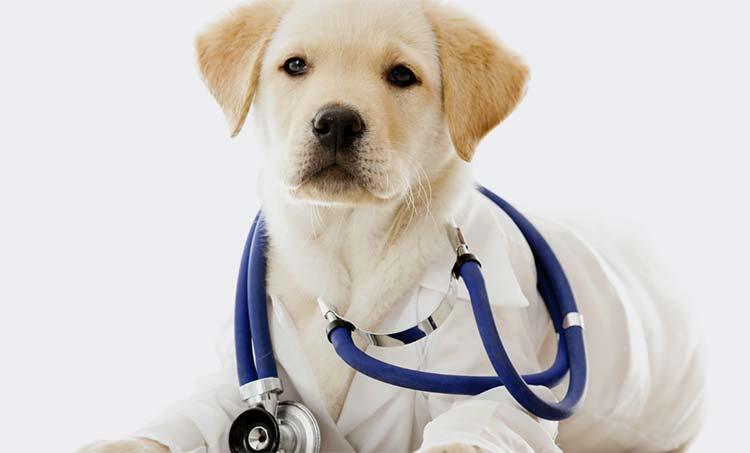 salud canina
