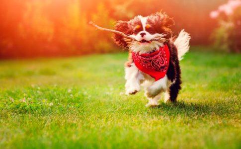 Cosas que tu perro hace cuando es feliz