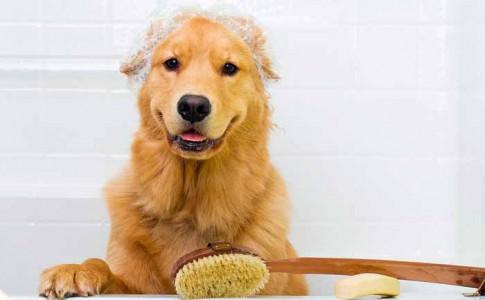 Spa para perros casero