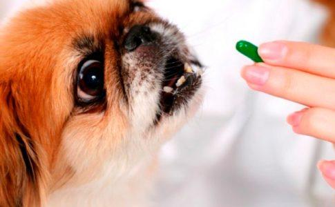 Desparasitar perros con diarrea