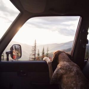 Empresas de transporte de mascotas