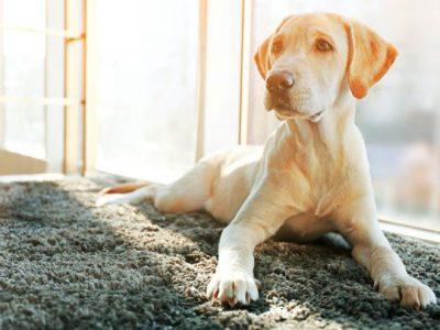 Guía para entender a tu perro paso a paso