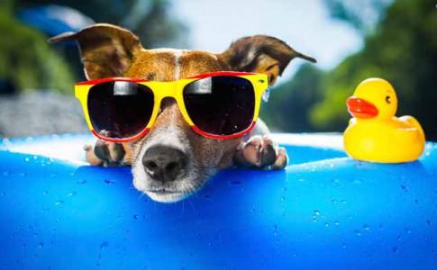 Viajes con perros