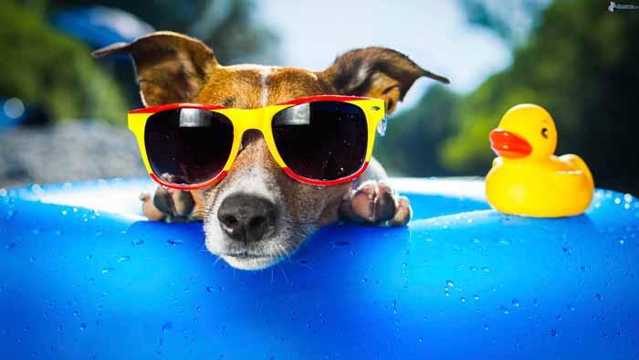 Tips para un excelente verano con tu perro