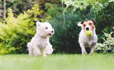 Beneficios de esterilizar a un perro