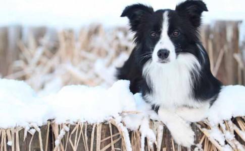 Ir con perro a la nieve