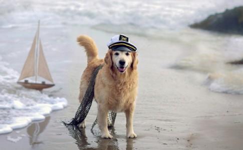 Viajes con perro a la playa