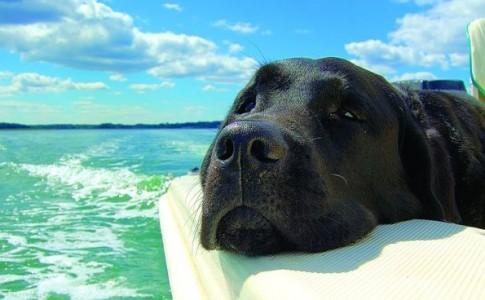 viajar en barco con mascotas