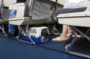 Viajar con perro en la cabina del avión