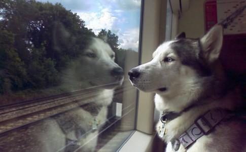Ir con perro en el tren