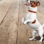 Nutrientes esenciales para los perros